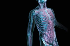 how-many-human-body-parts-remain-undiscovered-131111-670x440